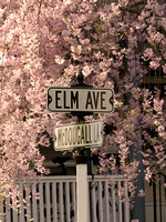 Spring 2013 Elm Ave at McDougall